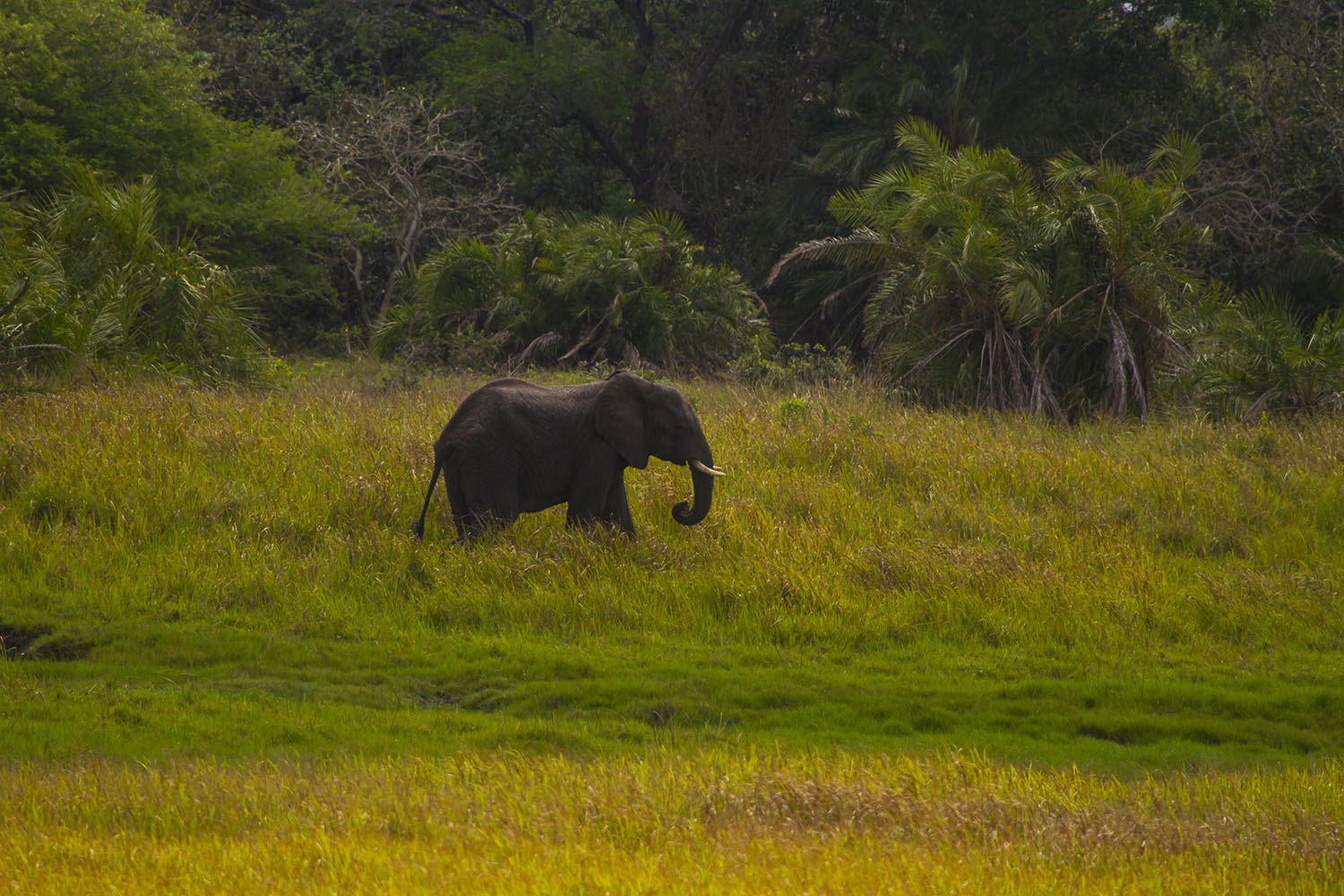white-pearl resort mozambique-lodges-zitundo-zambia-in-style-beach-bush-elephant-sightings