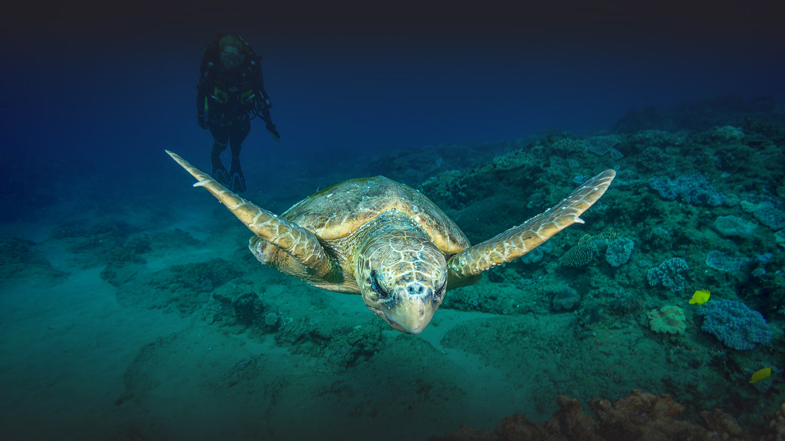 white-pearl resort mozambique-lodges-zitundo-zambia-in-style-private-beach-exclusive-location-diving-turtle