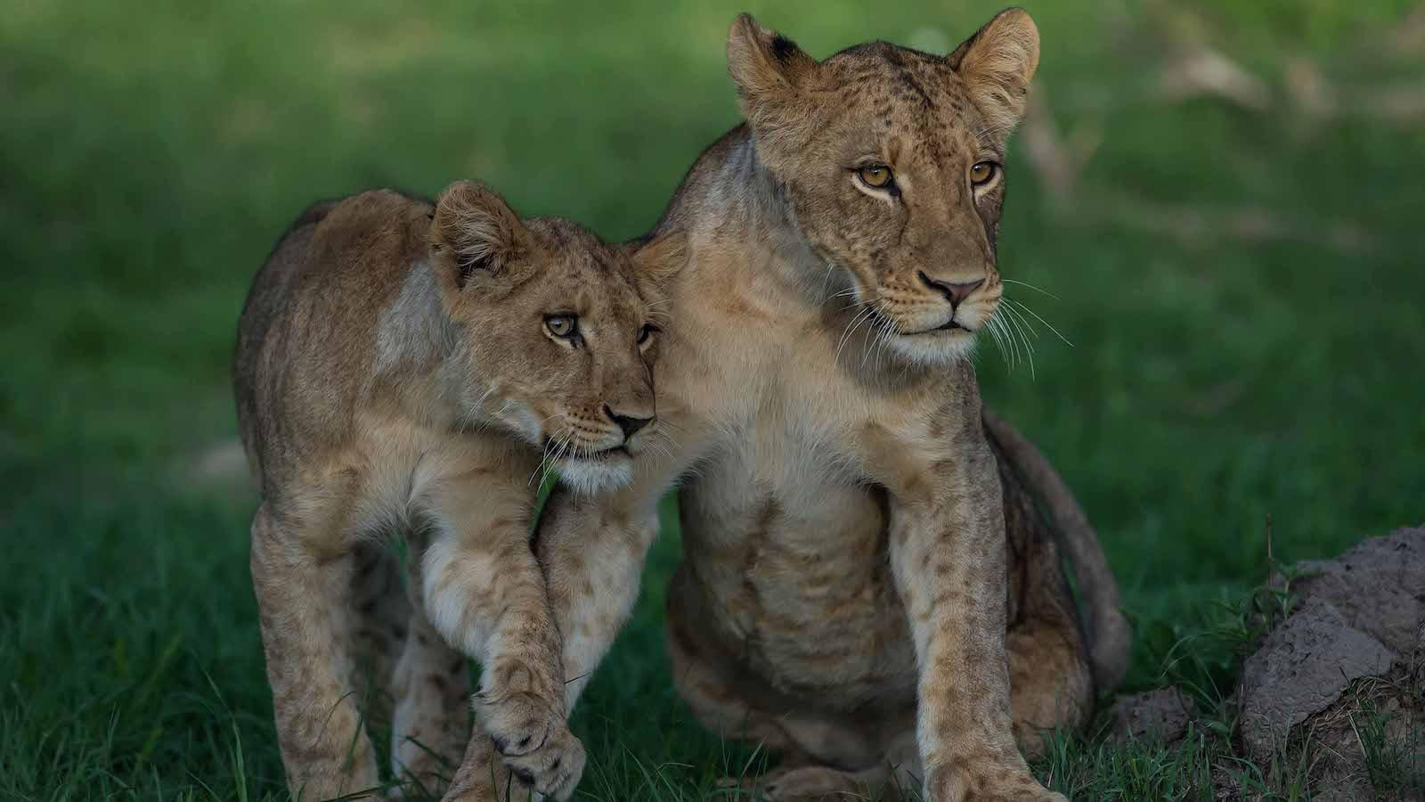 cubs Musekese camp