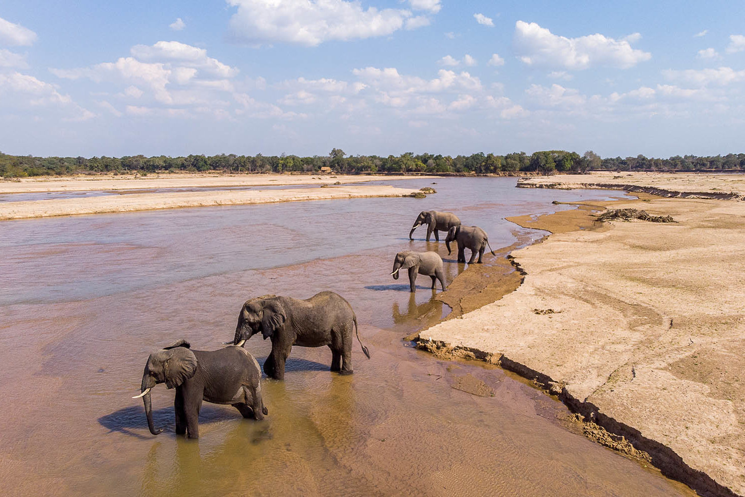takwela-camp-north-luangwa-national-park-lodges-zambia-in-style-intimate-stay-mwaleshi-river-elephants