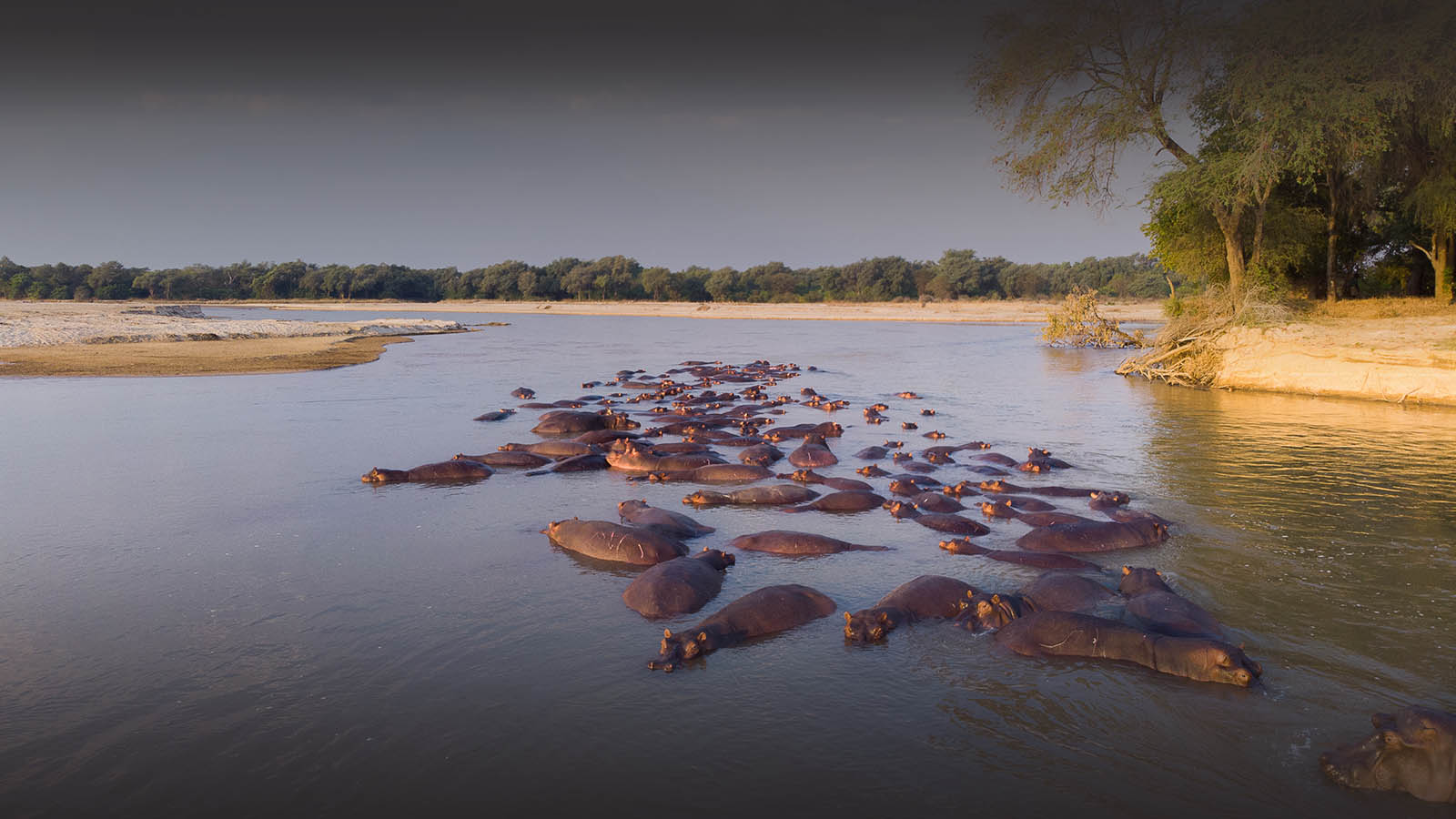 takwela-camp-north-luangwa-national-park-lodges-zambia-in-style-rustic-chic-hippo