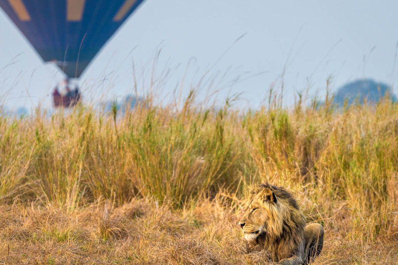 kasonso busanga camp kafue-lodges-zambia-in-style-busanga-plain-kafue-national-park-rustic-luxury-spectacular-wildlife-hot-air-balloon-lion