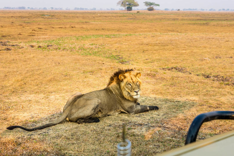 kasonso busanga camp kafue-lodges-zambia-in-style-busanga-plain-kafue-national-park-rustic-luxury-spectacular-wildlife-lion-game-drives