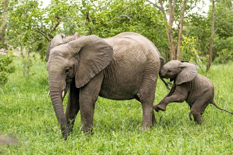leopard hills sabi-sands-lodges-greater-kruger-zambia-in-style-south-africa-game-experiences-elephants
