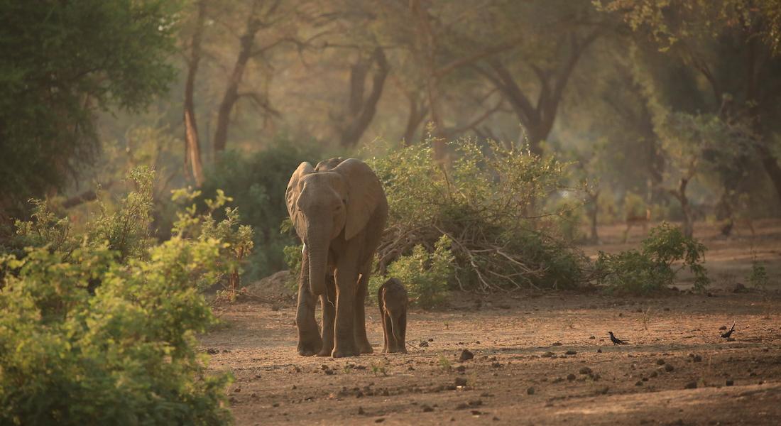 elephants lower zambezi
