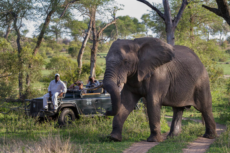 londolozi-greater-kruger-lodges-zambia-in-style-south-africa-londolozi-reserve-epic-experiences-elephant-bull