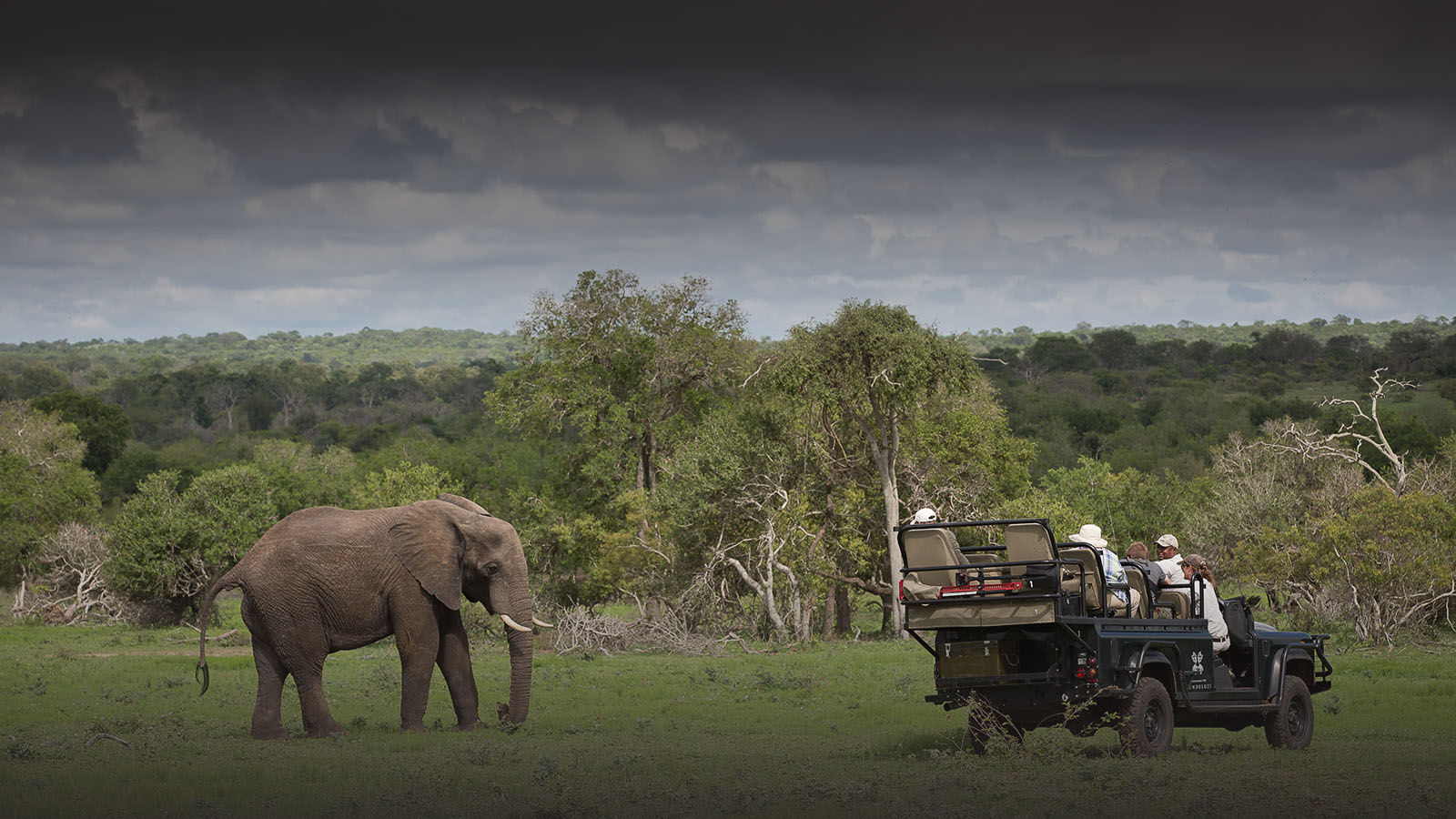 londolozi-greater-kruger-lodges-zambia-in-style-south-africa-londolozi-reserve-luxurious-wildlife-haven-elephant-sighting-game-drive