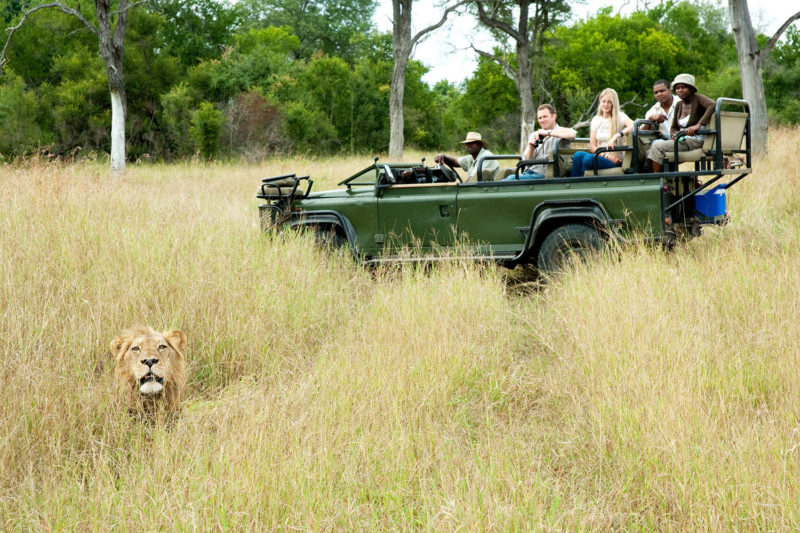 notten's bush camp greater-kruger-lodges-zambia-in-style-south-africa-sabi-sands-family-friendly-lion-sighting-game-drive