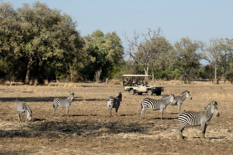puku ridge lodge-south-luangwa-national-park-lodges-zambia-in-style-location-game-drive-zebras