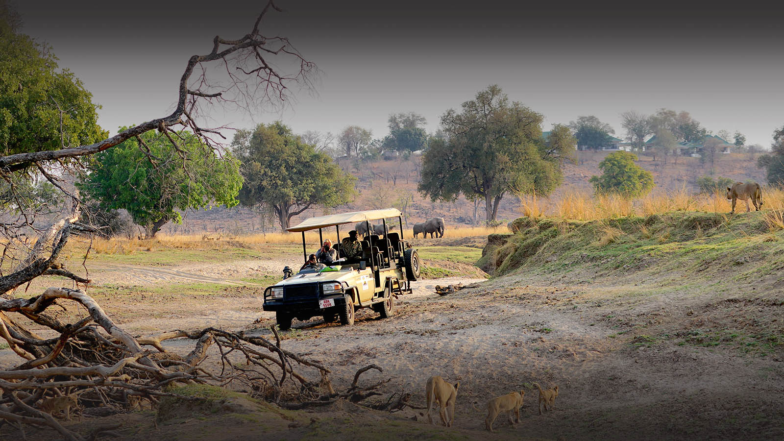 puku ridge lodge-south-luangwa-national-park-lodges-zambia-in-style-luxury-camp-luangwa-valley-lions-game-drive