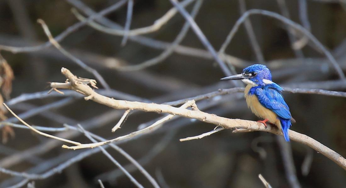 woodpecker lower zambezi