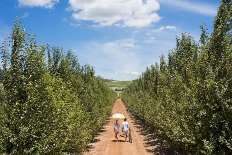 babylonstoren winelands-lodges-south-africa-accommodation-zambia-in-style-vineyards-drakenstein-mountains-exciting-activities-guests-lane-naartjies