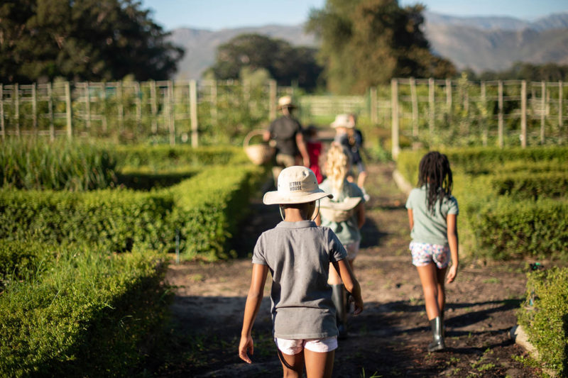 boschendal winelands-lodges-south-africa-accommodation-zambia-in-style-simonsberg-drakenstein-mountains-franschhoek-activities-for-the-whole-family-walks