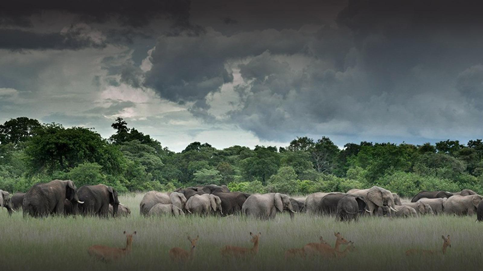 chisa busanga camp kafue-national-park-lodges-zambia-in-style-beautiful-bush-camp-elephants