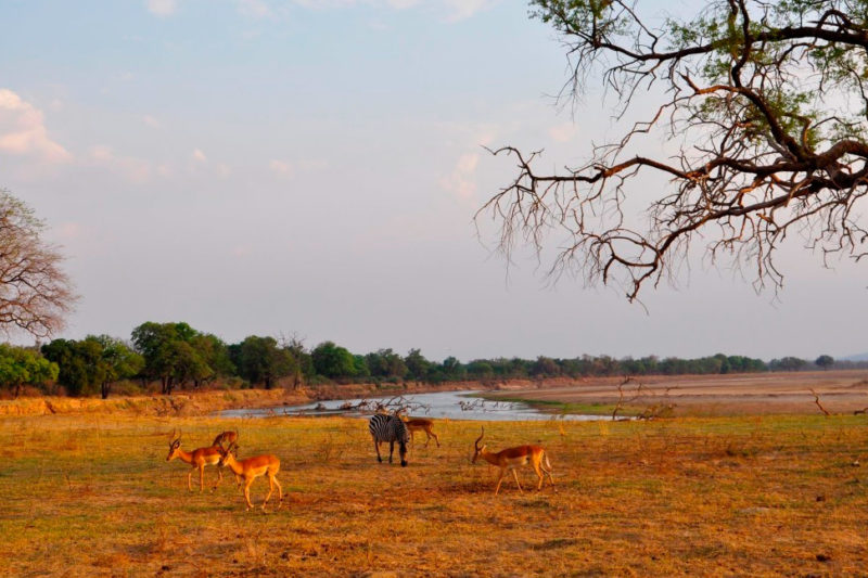 chisa busanga camp kafue-national-park-lodges-zambia-in-style-ultimate-luxurious-reality-eco-friendly-animals