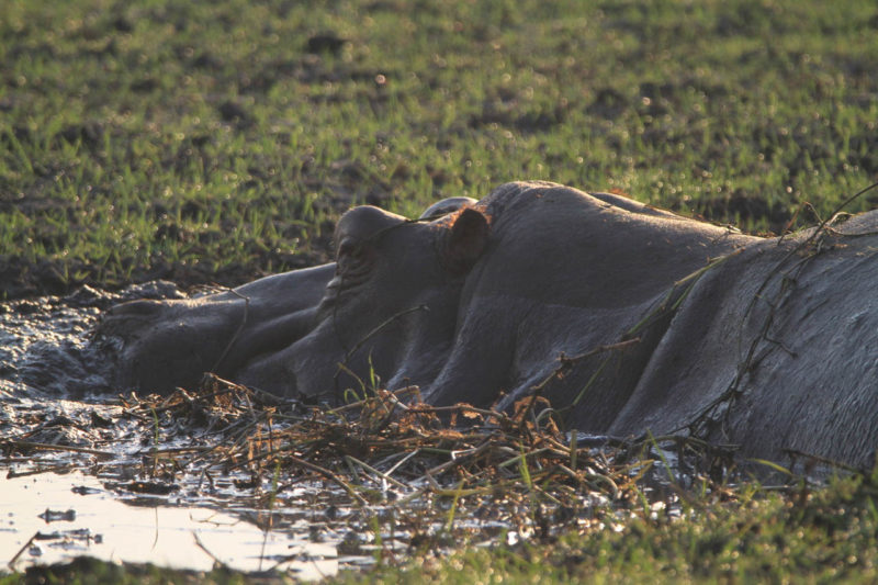chisa busanga camp kafue-national-park-lodges-zambia-in-style-ultimate-luxurious-reality-eco-friendly-hippo