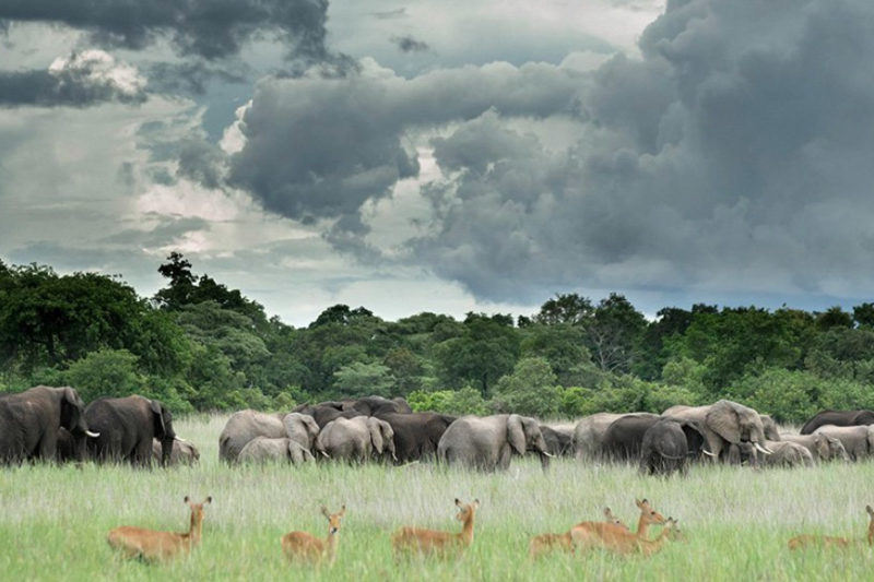 chisa busanga camp kafue-national-park-lodges-zambia-in-style-ultimate-luxurious-reality-eco-friendly-wildlife