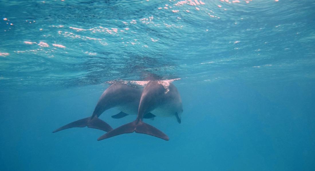 dolphins tanzania