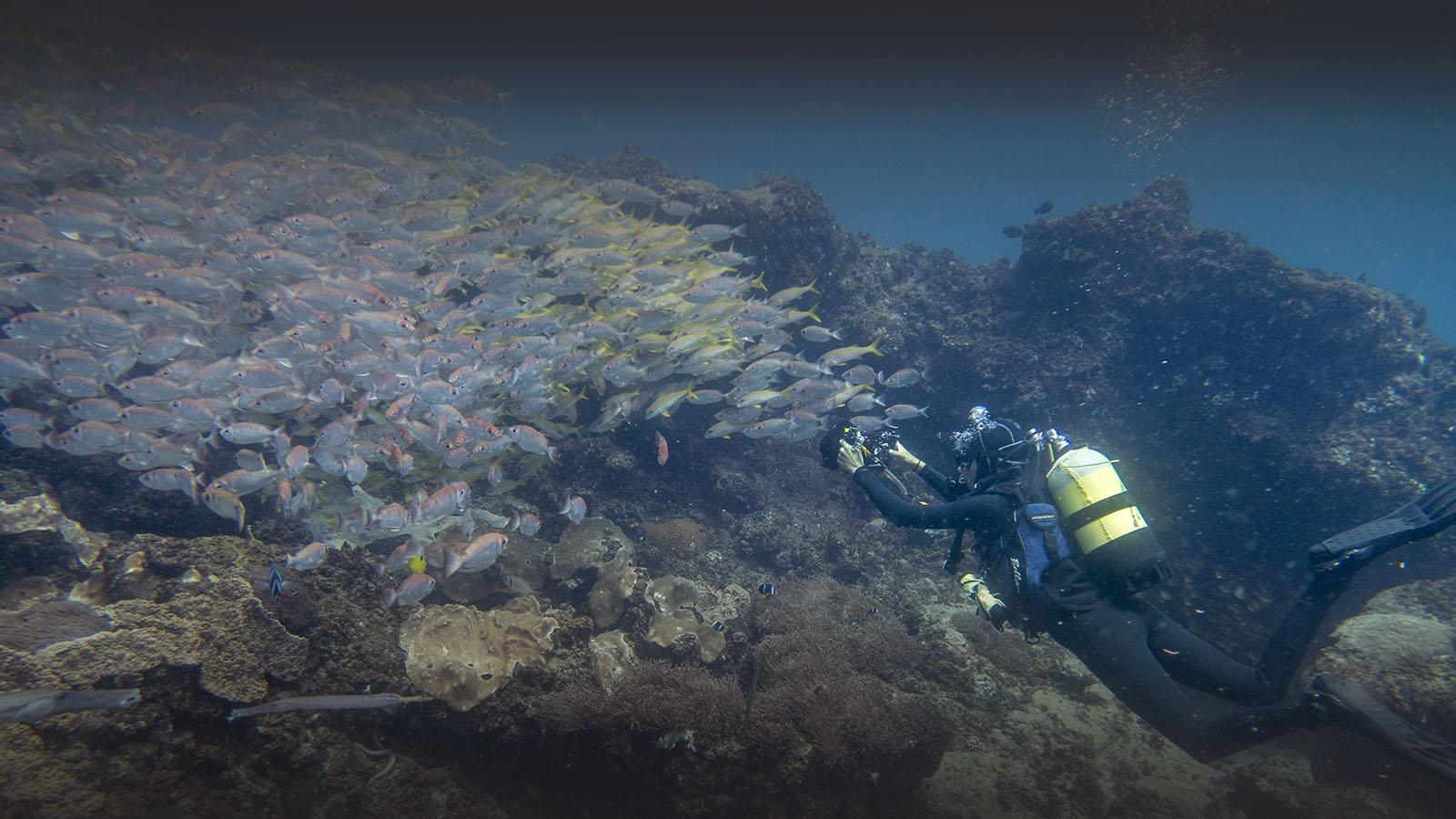 liquid dive adventures tofo-mozambique-lodges-zambia-in-style-scuba-diving-PADI-courses-shoal-fish