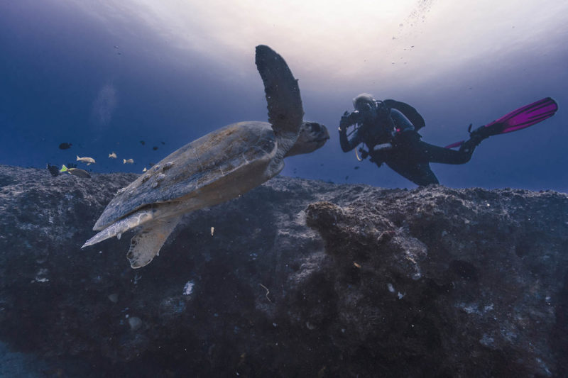 liquid dive adventures tofo-mozambique-lodges-zambia-in-style-scuba-diving-diver-photography