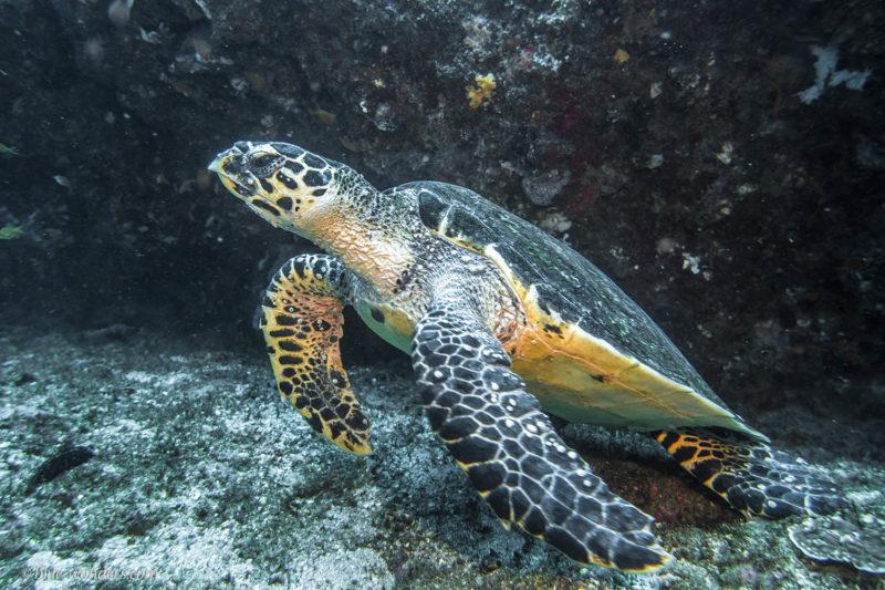 liquid dive adventures tofo-mozambique-lodges-zambia-in-style-scuba-diving-turtle